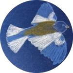 gorrion-cerchio
